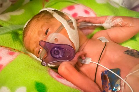 premature baby octopus toy